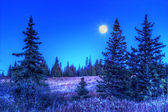 Moonlight in a spruce forest — 图库照片