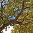 Underneath a cottonwood tree — Stockfoto