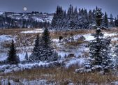 First snow with moon — Stock Photo