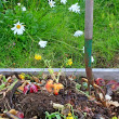 Compost pile with daisies - Stock Photo