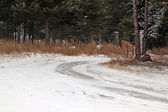First snow on a country road — Stockfoto