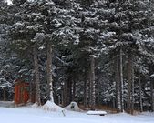 Outhouse and bench in the snow — Stok fotoğraf