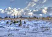Alaskan scenery in winter — Stockfoto