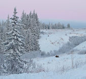 Pink sunset with moose — Stok fotoğraf