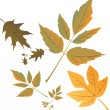 Royalty-Free Stock Vector Image: Autumn leafs