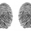 Two fingerprints — Stock Vector