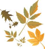 Autumn leafs — Stock Vector