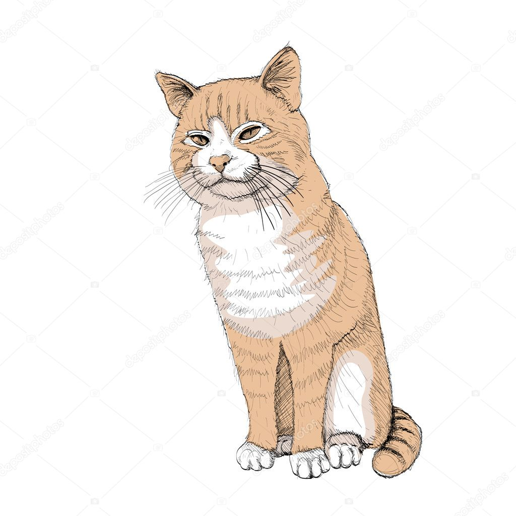 Isolated sitting cat on white - illustration — Stock Vector #6821591