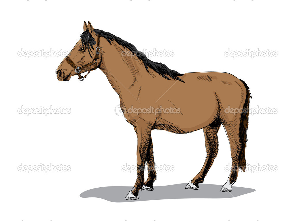 Isolated brown standing horse - illustration  Stock Vector #6822547