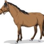 Standing horse — Stock Vector