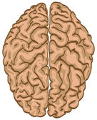 Color brain — Stock Vector