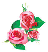 Roses decorative drawing — Stock Photo