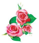 Roses decorative drawing — Stock Photo