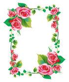 帧玫瑰 — 图库照片