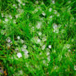Hail after storm on grass — стоковое фото #6782486