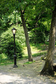 A lonely lantern in New York City Central Park — Stock Photo