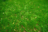 Close-up image of green grass — Stock Photo