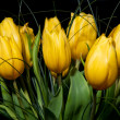 Yellow Tulips — Stock Photo #7572133