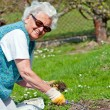 Stock Photo: Senior Woman in Garden
