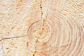 Wood Circles Detail — Stock Photo