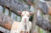 Animal Kid — Stock Photo