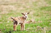 Animali bambino — Foto Stock
