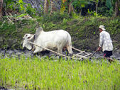 Balinese Farmer — Stock Photo