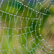 Beaded Cobweb - 