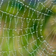 Beaded Cobweb — Stock Photo