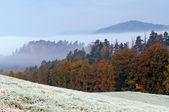 秋天的早晨白霜 — 图库照片