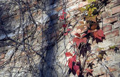 Autumn leaves and branches on urban wall — Stock Photo
