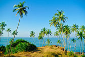 Palm trees against the sea — Stock Photo