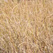 Stock Photo: Faded grass