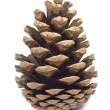 Stock Photo: One beautiful pine cone on white background