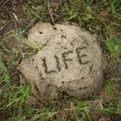 Stock Photo: Life is...