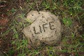 A vida é... — Fotografia Stock