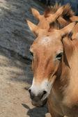 Portrait of a Horse. — Stock Photo