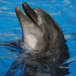 Foto Stock: Smile of Dolphin.