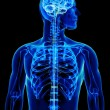 Stock Photo: X-ray with brain and spinal cord concept