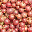 Red gooseberry - Stock Photo