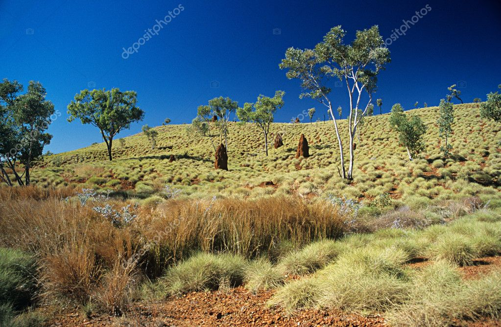 Grassy hill in australia — Stock Photo #7041252