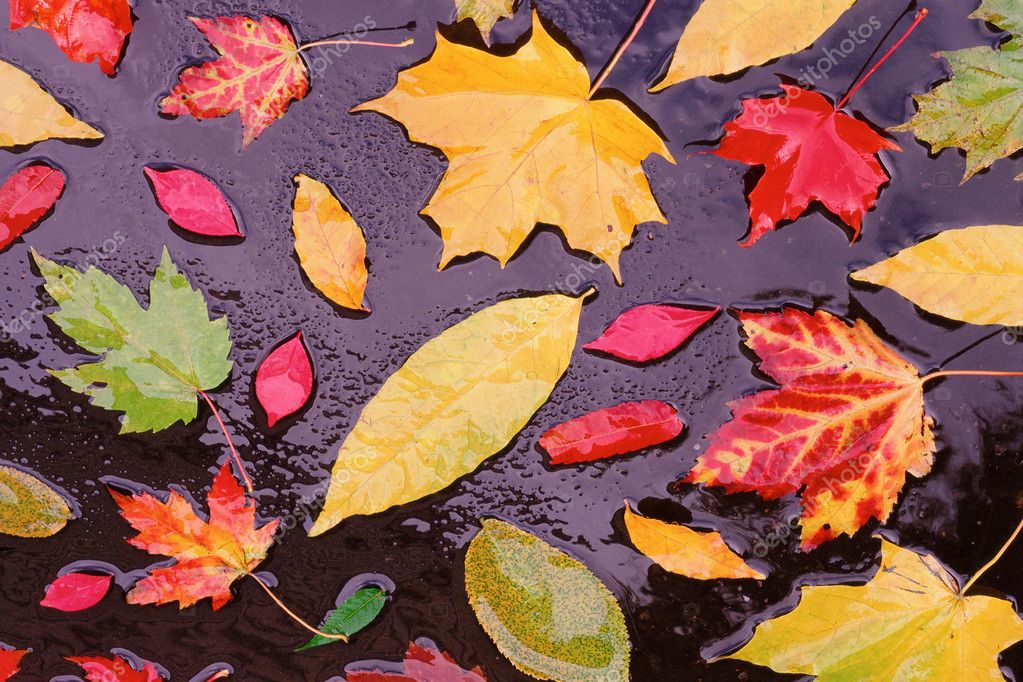 Variety of autumnal leaves floating in the water — Stock Photo #7051877
