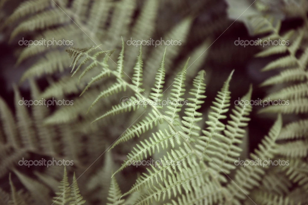 Ferns!  Stock Photo #7072114