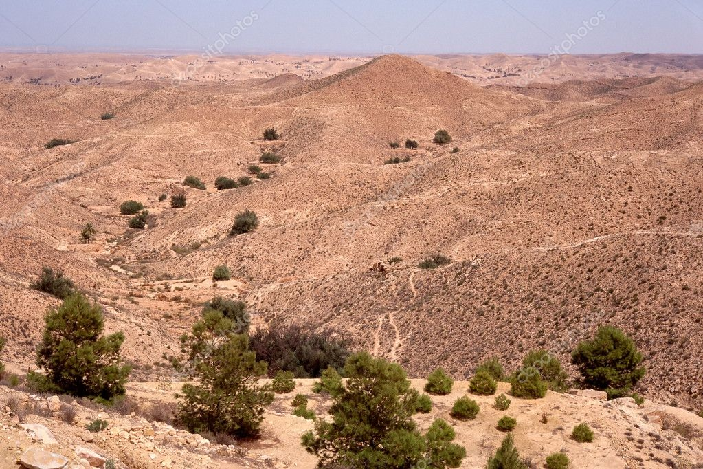 Trees in desert — Stock Photo #7072750