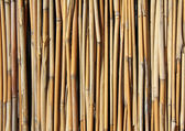 Bamboo set — Stock Photo
