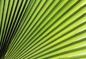 Green sun — Stock Photo