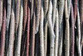 木棍 — 图库照片