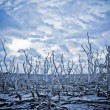 Stock Photo: Dead Trees under stormy sky