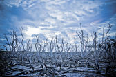 Dead Trees under a stormy sky — Stock Photo