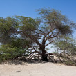 Stock Photo: Tree of life Bahrain
